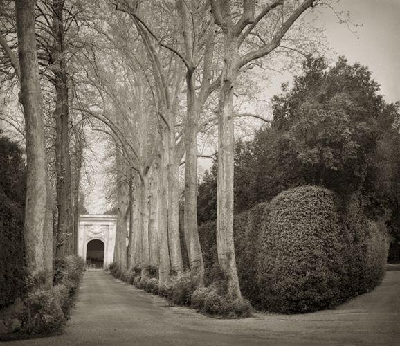 Allee, Boboli Gardens by Beth Dow