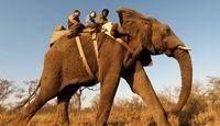 Elephant Back Safaris - African Travel Gateway