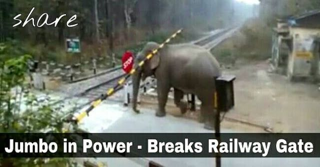 Elephant Breaks Railway Crossing Gate at Chapramari Wildlife Sanctuary in Dooars Today   An elephant broke down the gate of a railway level crossing at Chapramari Wildlife Sanctuary area of Jalpaiguri district in Dooars on Saturday Forest department officials said.  The railway line passes through the reserve forest area. The adult male elephant came from the forest and broke the gate of the railway level crossing.  The elephant stayed in the area for around 15 minutes then returned to the…
