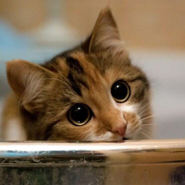 Говорят, что у меня большие и красивые глаза.  Интернет-зоомагазин Дом с котом