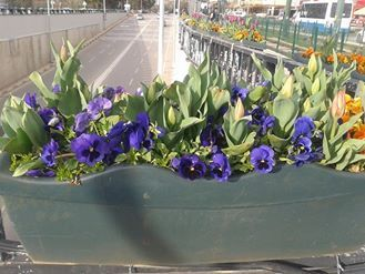 Hanada AL Refai: سيزهر الربيع