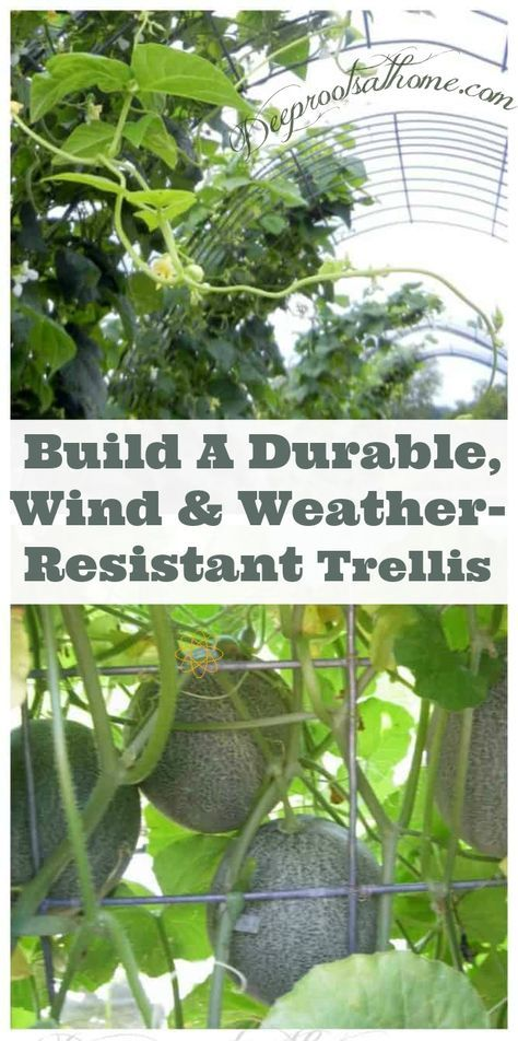 How to Build A Durable Wind  Weather-Resistant Trellis Vegetable