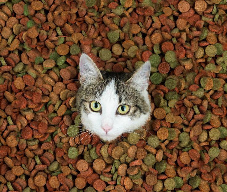 Home Made Cat Treats! Cat treats homemade, Homemade cat