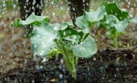 Hoeveel water geef je in de (moes)tuin? | Velt