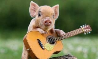 Belas e Comoventes Fotos de Animais | Os Mais Populares - TudoPorEmail