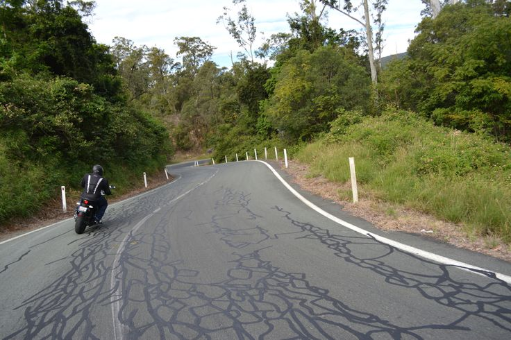 Mr Squiggles must have been on the Mt Lindesay Highway