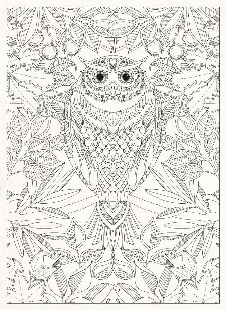 199 best Coloring Pages - Owls images on Pinterest Coloring books - copy baby owl coloring pages for adults