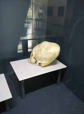 ovnis y fenómenos paranormales: cráneos alargados mayas-zoque