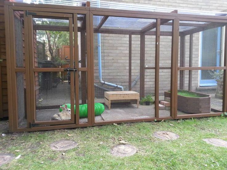 Nice aviary (attached to 6x4 shed), love the raised grass bed at the end!