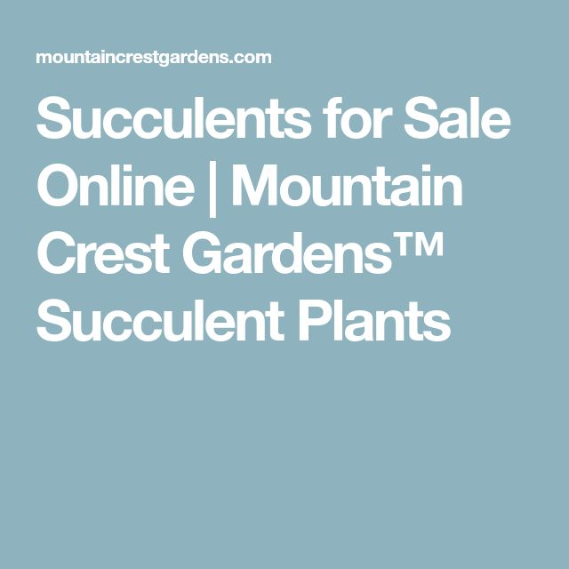 Succulents for Sale Online | Mountain Crest Gardens™ Succulent Plants
