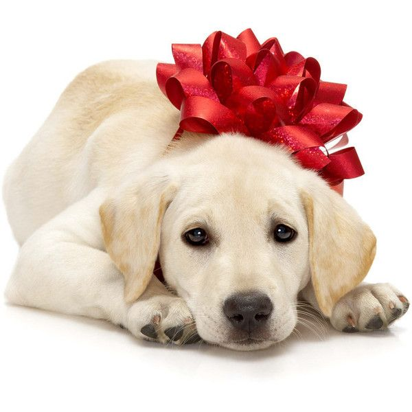Chrismas puppy ...PLEASEEEE