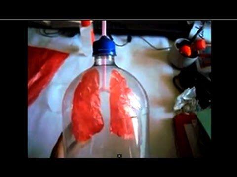 Sistema respiratorio.