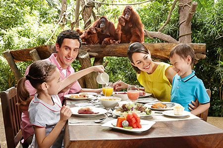 Singapore Zoo - Special Experiences - Dining with Animals - Jungle Breakfast with Wildlife