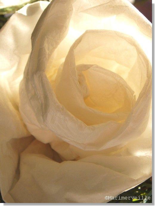 Rose de Papier de soie (Création Marimerveille)