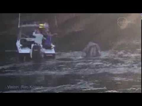 This Whale Was Drowning In Garbage Until Two Heroic Teens Saved The Day: Watch - MTV
