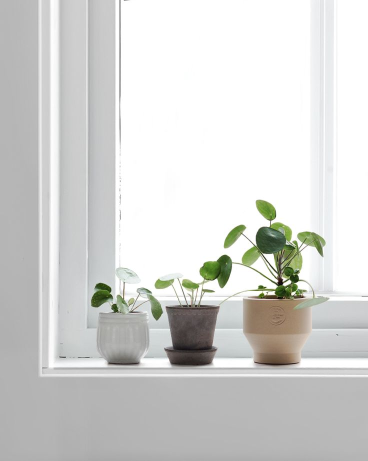 Only Deco Love: Pilea Love : How to propagate your Pilea