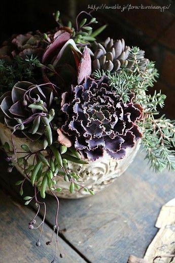 デコラな多肉植物の寄せ植え の画像|フローラのガーデニング・園芸作業日記