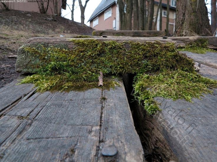Kuva: Portaat - porras sammal vihreä harmaa talo rakennus vanhapuu naula kulunut - Kuvatoimisto - Photostock Vastavalo.fi