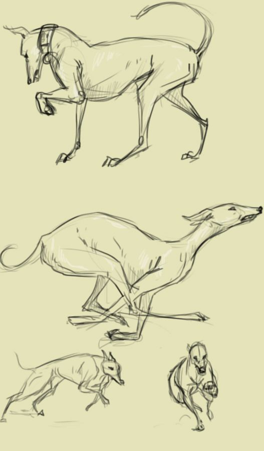 Greyhounds by ~Paso on deviantART