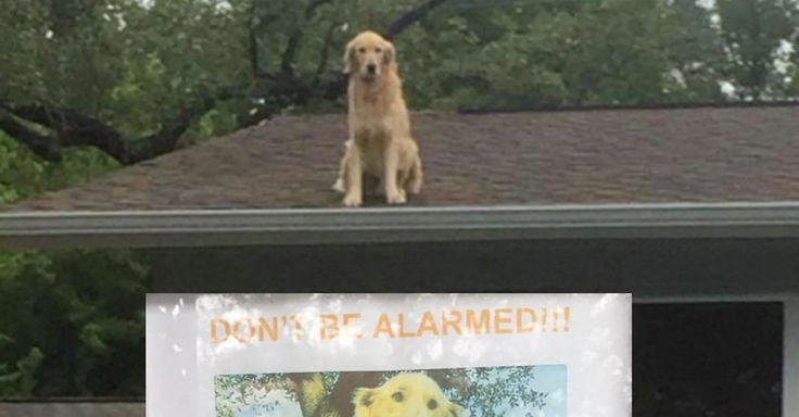 As you can see, he's hanging out on the roof, but don't be alarmed! According to his humans, he really just likes it up there. :D