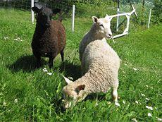 Roihuvuoren monipuolinen palvelukeskus. Kesällä palvelukeskuksen pihapiirissä voi tavata lampaita.