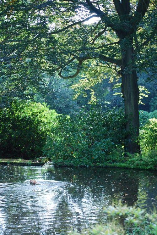 Lake at Wightwick Manor Wolverhampton, England