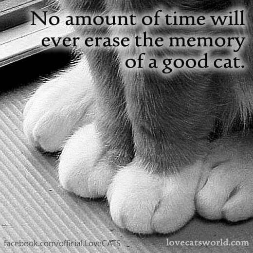 No amount of time will ever erase the memory of a good cat.