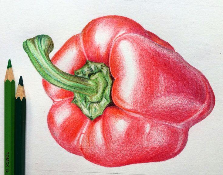 Paprika, illustration, vegetables, drawing, рисунок, иллюстрация, Zeichnung, цветные карандаши, паприка, перец, овощ