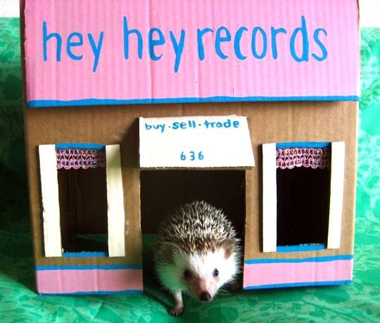I'm a dog person. I used to be a cat person. I've never been a rodent, small-creatures-in-cages-person. That said, there's an obvious lack of cool things for smaller pets to play with. Even if you're like me and not into mice, hamsters or, in this case, hedgehogs, that doesn't mean they shouldn't have designer digs to hang out in.