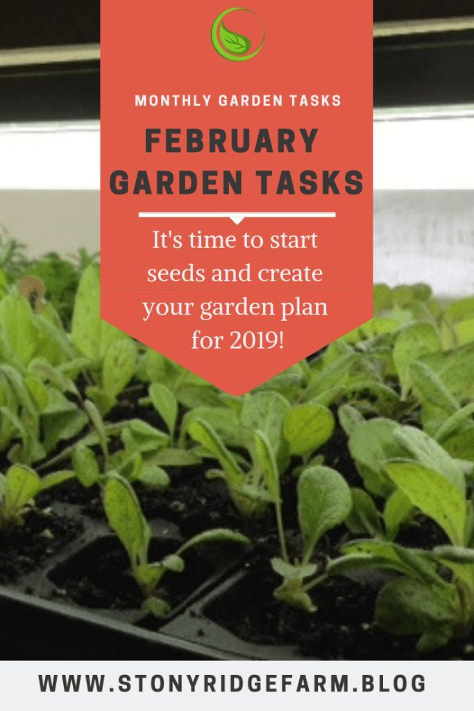 February Garden Tasks When To Plant Garden Garden Planner