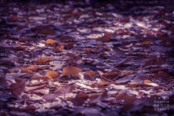 Autumn forest floor - beautiful lighting