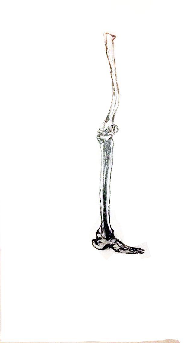 studio 6. Fashion Design (Honours) RMIT University. led pencil sketch, bones, Leg structure.