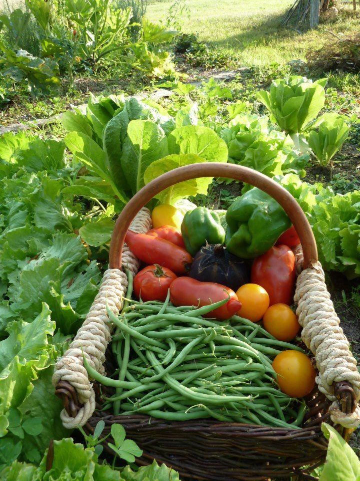 овощи огородные в картинках тактическое