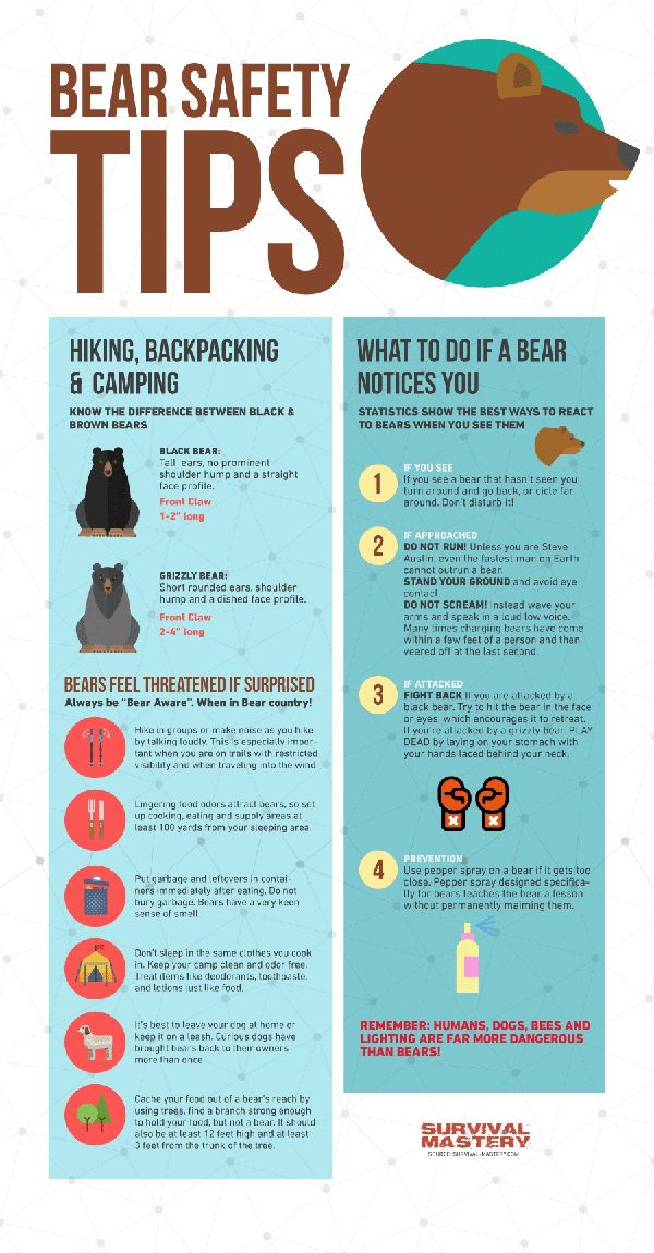 Bear Safety and Hunting Tips