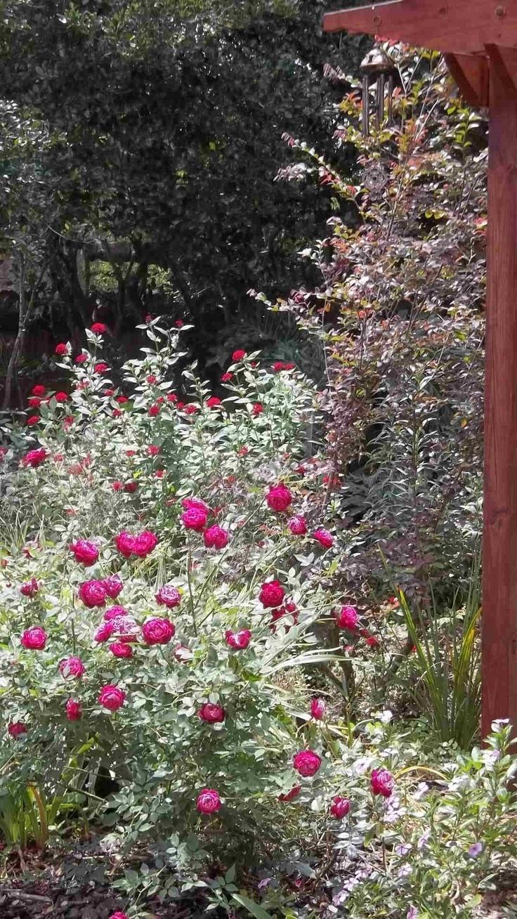 10 best tampa landscape design cottage color gardens for Landscape design tampa