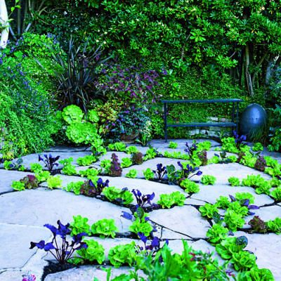 Between pavers: Gardens Ideas, Plants Edible, Small Spaces Gardens, Gardens Landscape, Bar Tapestries, Patio Floors, Bar Gardens, Salad Bar, Gardens Plants