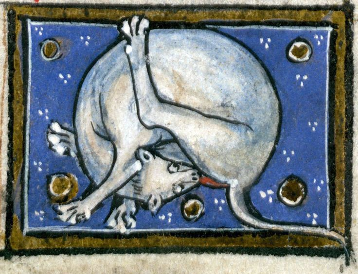 but licking cat Thomas of Cantimpré, Liber de natura rerum, France ca. 1290. Valenciennes, Bibliothèque municipale, ms. 320, fol. 72r