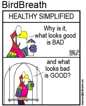 Healthy Simplified!!! #bird #cartoon #parrot