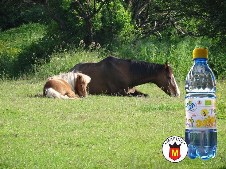 BIOMINERALE-Junior * Woda mineralna o smaku cytrynowym- jabłkowym - pomarańczowym *Bez konserwantów * Bez cukru i substancji słodzących z certyfikatem BIO. Zapraszamy do współpracy !!! Producent: MARINO sp.z.o.o *  e-mail: info@marino.pl  Tel.: +48 655402192