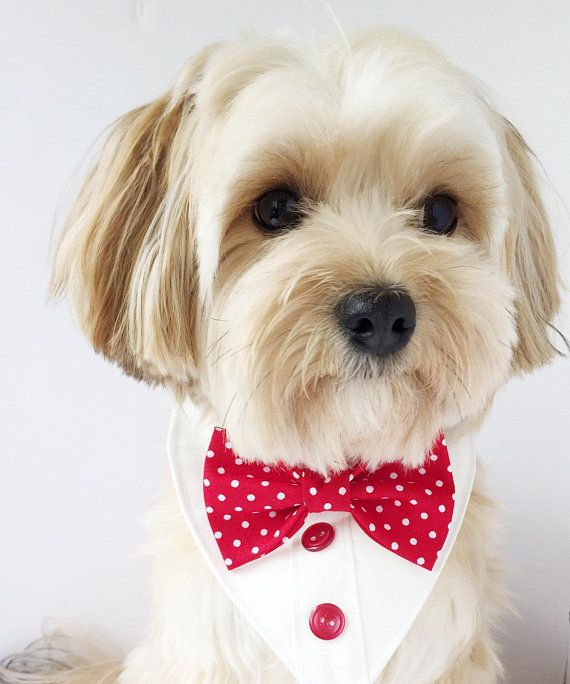 Red Dot Bow Tie Bandana Wedding Dog Bandana Dog Formal Dog