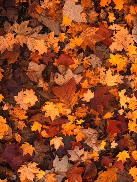 Background: Fall Foliage, Autumn, Leaves, October, Forest, Brown