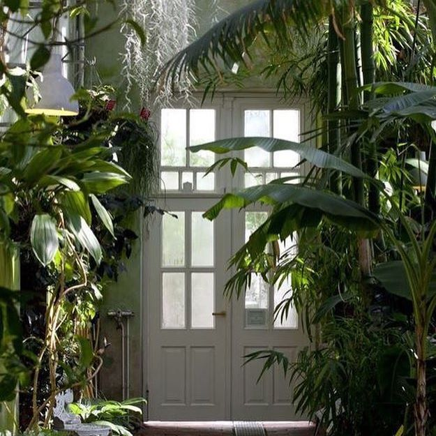 Recommendations For Foresty Jungly Houseplants That