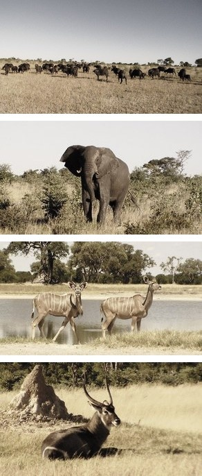 Zimbabwe Safaris to Davison's Camp in the Hwange National Park