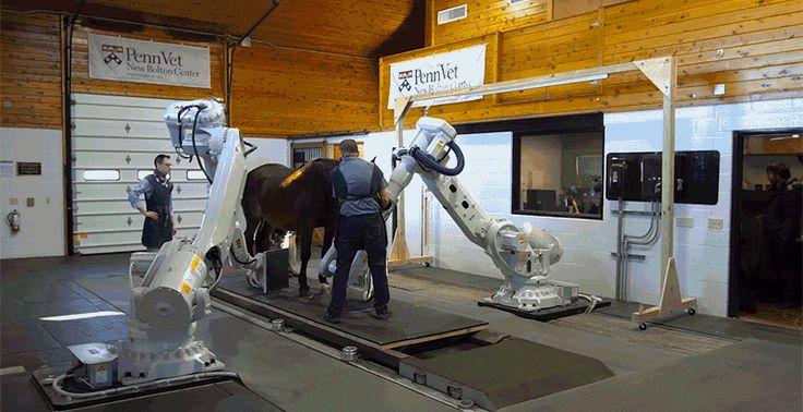 CTスキャンがロボットアーム式になって競走馬にずっと優しくなりました : ギズモード・ジャパン
