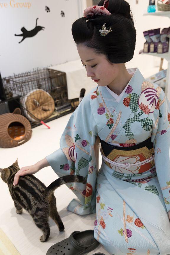 February 2017: Maiko Ayaha (Katsumi Okiya) of Pontocho petting a cat at a pet store. Source: tata9999 - Blog