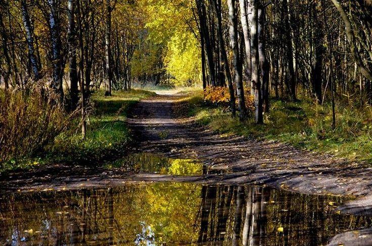 Katowice - Poland #Katowice #Szopienice #Morawa #Forest #Tree #MirrorShots #atumn