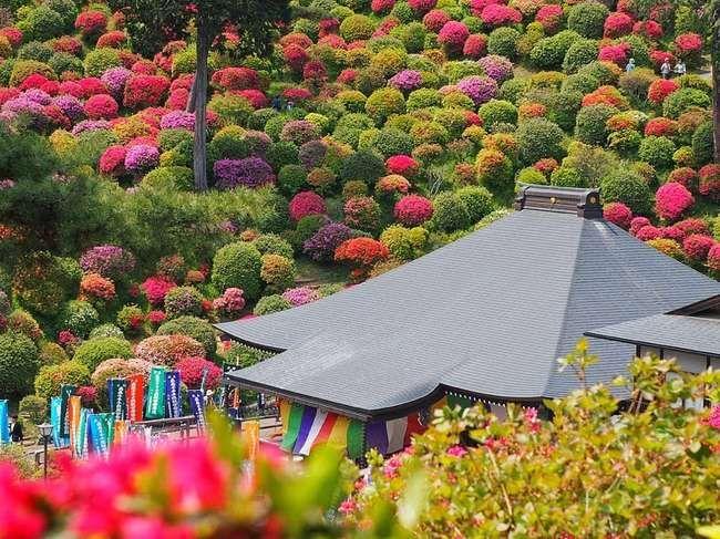 Azaleas in full bloom in Shiofune Kannon-Ji temple, Ome, Japan  l Photo Takashi .M