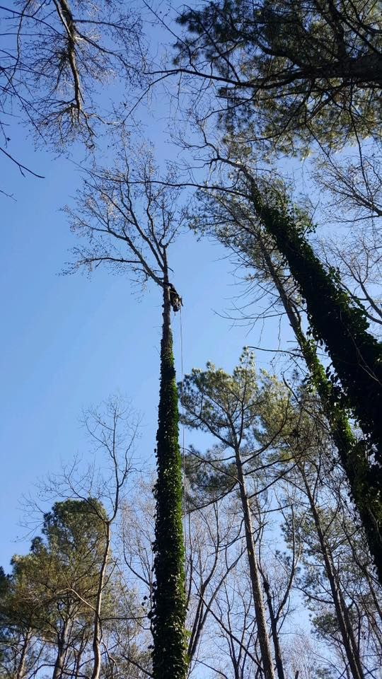 RT https://t.co/LH7Ce8uyT5 RT https://t.co/PXT7s5eHy9 RT https://t.co/T0EwfghIgU RT https://t.co/bR74NNqM73 Need #treeremoval? Call/Text 919-630-8728 any time to schedule a FREE estimate w https://t.co/hzK2qdXBOO #torontobusiness https://t.co/2cE7wfxHg8