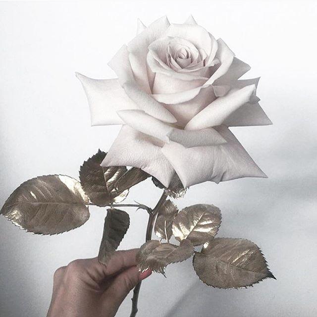 • BLOOM • Winter means roses • #rose #wedding #bloom #bride #onedaybridal  #Regram via @onedaybridal