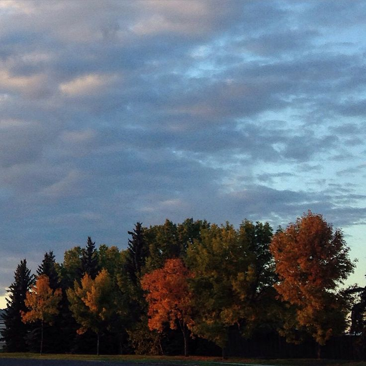 Autumn 2015 Edmonton